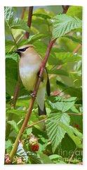 Hand Towel featuring the photograph Cedar Waxwing by Sean Griffin