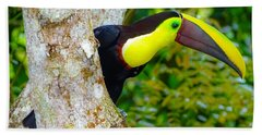 Chestnut-mandibled Toucan Hand Towel