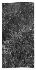 Compass Plant Hand Towel by Tim Good