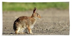 Cottontail Rabbit Stony Brook New York Bath Towel