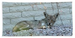 Hand Towel featuring the photograph Coyote by Anne Rodkin
