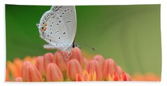 Eastern Tailed Blue On Butterfly Weed Bath Towel