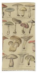 Edible And Poisonous Mushrooms Hand Towel