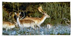 Fallow Deer In England Hand Towel by Chris Smith