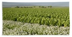 Field Of Organic Lettuce Bath Towel