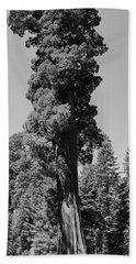 Giant Sequoia, Sequoia Np, Ca Bath Towel