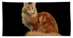 Ginger Maine Coon Cat Isolated On Black Background Hand Towel