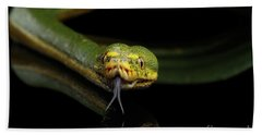 Green Tree Python. Morelia Viridis. Isolated Black Background Hand Towel