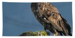 Immature Bald Eagle Hand Towel by Brian Chase