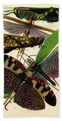 Insects, Plate-8 Hand Towel