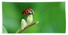 Lady Bug Hand Towel