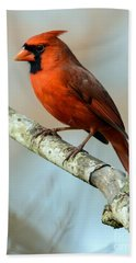 Male Cardinal Bath Towel by Debbie Green