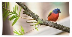 Male Painted Bunting Hand Towel