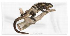 Bath Towel featuring the drawing Mexican Spiny-tailed Iguana, Ctenosaura Pectinata by Elsasser