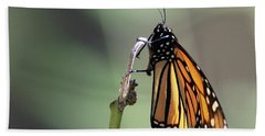 Monarch Butterfly Stony Brook New York Hand Towel