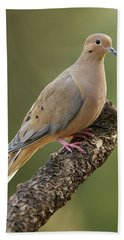 Mourning Dove Hand Towel by Doug Herr