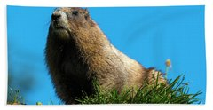 Marmot Bath Towels