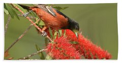 Orchard Oriole  Bath Towel by Alan Lenk