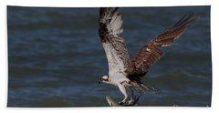 Osprey In Flight Hand Towel by Meg Rousher