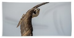 Osprey In Flight Hand Towel by Paul Freidlund