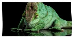 Parson Chameleon, Calumma Parsoni Orange Eye On Black Hand Towel by Sergey Taran