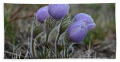Pasque Flowers  Hand Towel