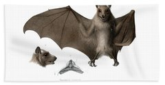 Bath Towel featuring the drawing Peters's Epauletted Fruit Bat by Hugo Troschel