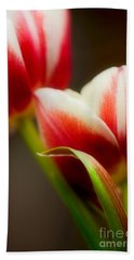 Red And White Tulips Hand Towel