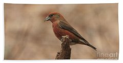 Red Crossbill Hand Towel
