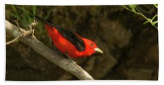 Scarlet Tanager Bath Towel by Alan Lenk