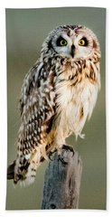 Short Eared Owl Hand Towel