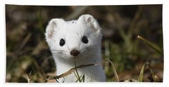Short-tailed Weasel Mustela Erminea Hand Towel