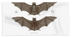 Bath Towel featuring the drawing Sundevall's Roundleaf Bat by A Andorff