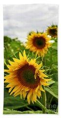 Sunflower Field Hand Towel