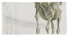 The Anatomy Of The Horse Hand Towel