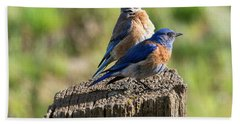 Western Bluebird Pair Hand Towel by Mike Dawson