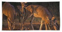 Whitetail Deer At Waterhole Texas Bath Towel