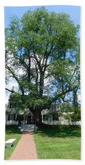 130 Year Old Tree Bath Towel by Catherine Gagne