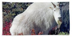 1m4900 Mountain Goat Near Mt. St. Helens Hand Towel