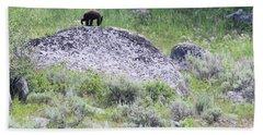 American Black Bear Yellowstone Usa Hand Towel