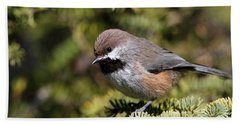 Boreal Chickadee Bath Towel