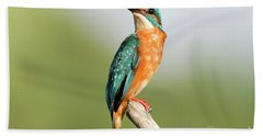 Common Kingfisher Alcedo Atthis Hand Towel