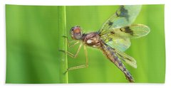 Eastern Amberwing Bath Towel