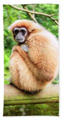 Hand Towel featuring the photograph Lar Gibbon by Alexey Stiop