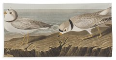 Piping Plover Bath Towel