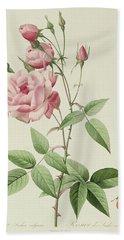 Rosa Indica Vulgaris Bath Towel