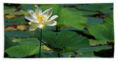 The Lotus Pond Hand Towel by Paul Mashburn