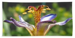 Tricyrtis Named Taipei Silk Hand Towel