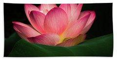 Water Lily Bath Towel by Jay Stockhaus