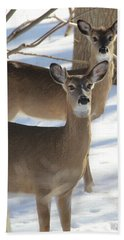 White Tailed Deer Smithtown New York Bath Towel by Bob Savage
